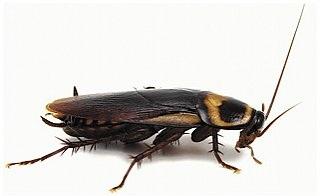 Дезинфекция от тараканов цена